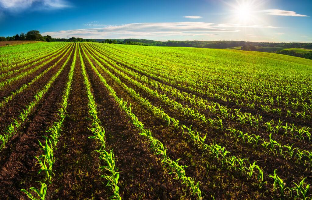 田舎,物件,農地法